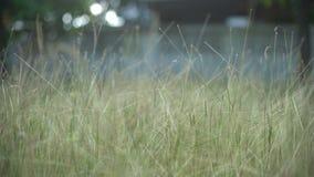 Gehen durch Gras im Garten stock footage