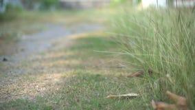 Gehen durch Gras im Garten stock video footage