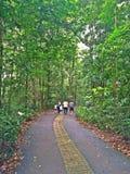 Gehen in eine Waldreserve Lizenzfreie Stockbilder