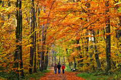 Gehen in Herbstpark Stockbilder