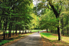Gehen in Herbstwald Stockbild