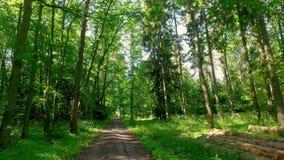 Gehen mitten in grünem Wald in Polen stock video