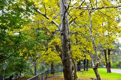 Gehen Sie in den Parkwald Stockbilder