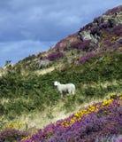 Gehen um Conwy und seinen Berg Stockfotos