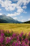 Gehen um Sils See - oberes Engadine-Tal - die Schweiz Lizenzfreie Stockfotografie