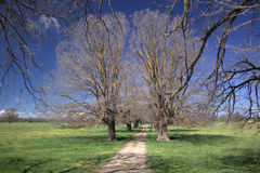 Gehen unter Bäumen Stockbild