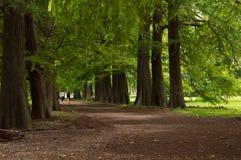 Gehen unter hohem Baum Stockbilder