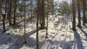 Gehen in Winterwald stock video