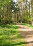 Gehende Dame ein Hund auf dem Weg zwischen die hohen Bäume auf dem Sandringham-Zustand, Norfolk Lizenzfreie Stockfotos
