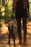 Gehende französische Bulldogge der jungen Frau im Wald bei Sonnenuntergang Stockbild