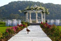 Gehende Hochzeit der Ente Stockbild