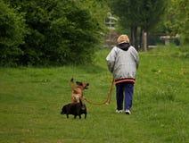 Gehende Hunde Lizenzfreie Stockbilder