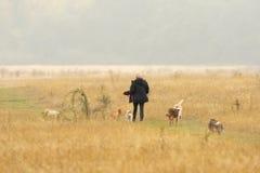 Gehende Hunde der Frau im Park lizenzfreie stockfotos
