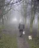 Gehende Hunde des Mannes im Holz Stockbilder