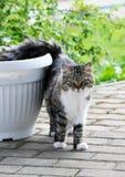 Gehende Katze Lizenzfreies Stockbild