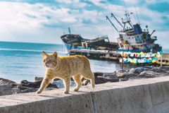 Gehende Katze an der Küste mit versunkenem Schiff und farbigem Ballonhintergrund Stockfoto