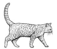 Gehende Katzenillustration, Zeichnung, Stich, Tinte, Linie Kunst, Vektor Lizenzfreies Stockfoto
