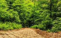 Gehende Pflasterung des Bürgersteigs in einem Park oder in einem Wald Stockfotografie