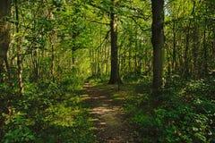 Gehende Spur durch einen üppigen grünen Wald Stockfotografie
