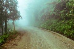 Gehende Spur in einem grünen Wald mit Nebel Lizenzfreies Stockbild
