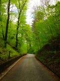 Gehende Spur in Grunwald Stockbild