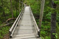 Gehende Spur im Holz Lizenzfreies Stockbild