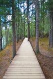 Gehende Spur innerhalb des Waldes lizenzfreie stockbilder