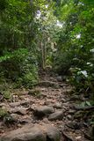Gehende Spuren mit den kleinen und großen Felsen im grünen Wald stockfotos