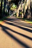 Gehende Straße Stockfotos