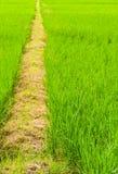Gehende Straße auf grünem Bauernhof Stockbild