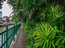 Gehende Straße mit vielen Bäumen nahe Fluss lizenzfreies stockfoto