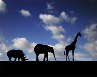 Gehende Tiere stockfoto