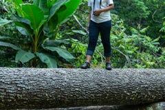 Gehender Baumstamm des Wanderers, touristische Schritte des Mädchens auf einem Klotz wandernd Stockbilder