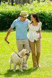 Gehender Hund der glücklichen Paare auf Parkrasen Lizenzfreies Stockfoto