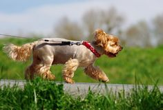 Gehender Hund in der Natur stockbild