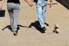 Gehender Hund der Paare zusammen Lizenzfreies Stockfoto