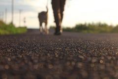 Gehender Hund des Mannes Stockbild