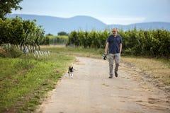 Gehender Hund des Mannes in den Weinbergen Lizenzfreie Stockbilder