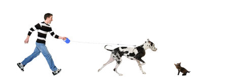 Gehender Mann sein Hund (großer Däne 4 Jahre) Lizenzfreie Stockbilder