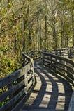 Gehender Pfad im Wald Stockbilder