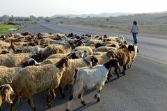 Gehender Schäfer seine Schafe stockfotografie