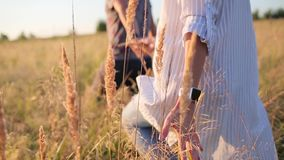 Gehendes Händchenhalten der Paare in der Rasenfläche stock video footage