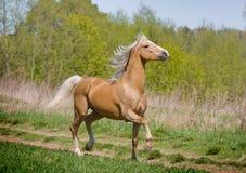 Gehendes Pferd Lizenzfreie Stockfotos