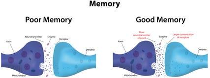 geheugen stock illustratie