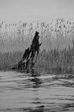 Geheugen van een boom Stock Foto's