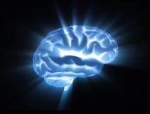 Gehirn Stockbild