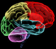 Gehirn Lizenzfreies Stockbild