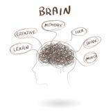 Gehirn, ein denkendes menschliches Konzept Vektor Lizenzfreie Stockfotos