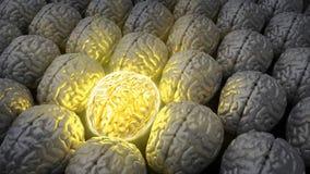 Gehirn eines Genies Stockfoto