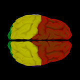 Gehirn-Großhirn Lizenzfreie Stockfotografie